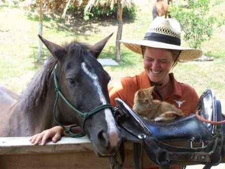 Kitten meets horse